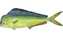 Where can I buy fresh Mahi Mahi from a local farmer.