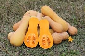 Where can I buy fresh Butternut squash from a local farmer.