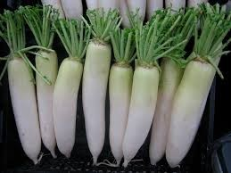 Where can I buy fresh Daikon from a local farmer.