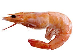 Where can I buy fresh Shrimp from a local farmer.