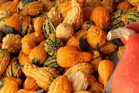 Where can I buy fresh Baby Mixed Gourds from a local farmer.