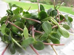 Where can I buy fresh Sunflower Sprouts from a local farmer.