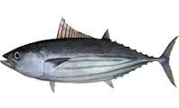 Where can i buy Skipjack tuna (Aku)?  Find out which local farmer has Skipjack tuna (Aku) for sale.