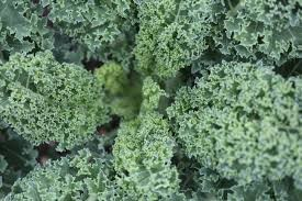 Where can I buy fresh Kale from a local farmer.