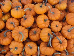 Where can i sell my local Pumpkin.