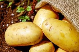 Where can I buy fresh Sweet potato - Yellow from a local farmer.