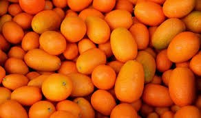 Where can i buy Kumquat?  Find out which local farmer has Kumquat