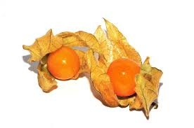 Where can I buy fresh Poha Berry Physalis from a local farmer.