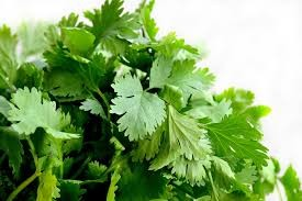Where can I buy fresh Cilantro from a local farmer.