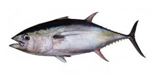 Where can i buy Albacore?  Find out which local farmer has Albacore for sale.