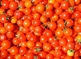 Where can i buy Cherry Tomato?  Find out which local farmer has Cherry Tomato for sale.