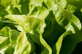 Where can I buy fresh Butter Head Lettuce from a local farmer.