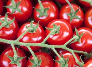 Where can I buy fresh Cherry Tomato from a local farmer.